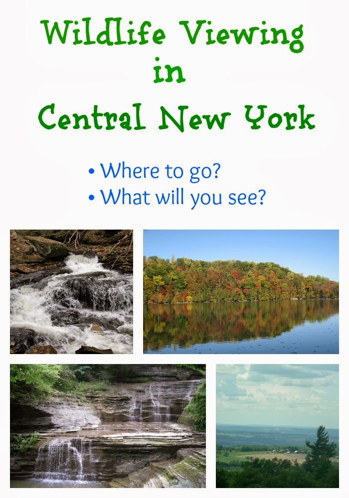 A great guide on where to view wildlife in Central New York. #travel