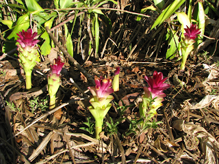 flowers from the ground