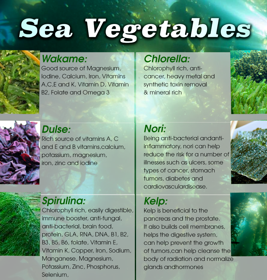 How The Super Sea Veg Supplement Helps Your Body's Nutrition Requirement?