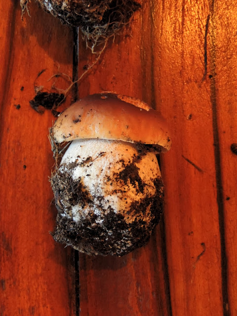 Picture of a cep