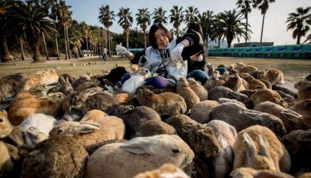 Rabbit Island and the city where deer romp among free people