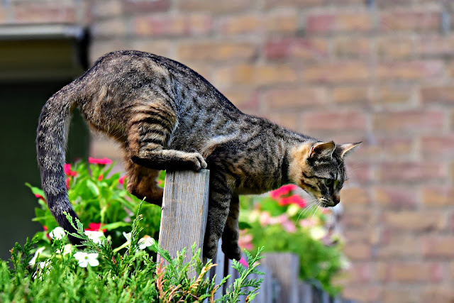 How to keep Cats out of Gardens