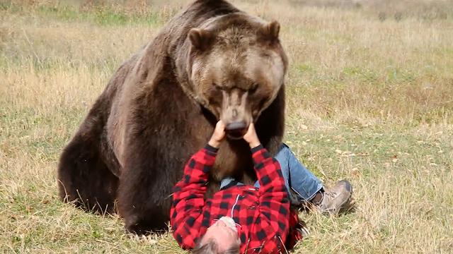 Ce să faci și cum să te aperi dacă întâlnești ursul pe munte