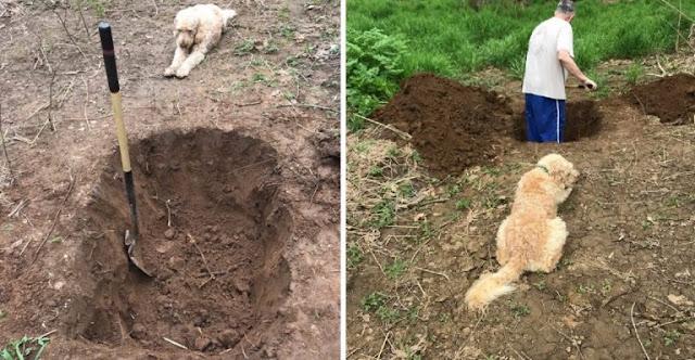 Пёс стоял и смотрел на свою могилу, которую копал его хозяин!