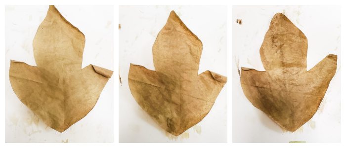 comparison of leaves with and without wax