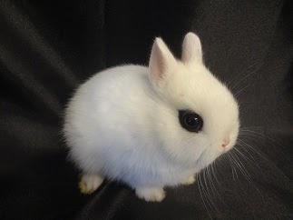 Emily S Hoppin Hotots Basic Bunny Care 101 Part A
