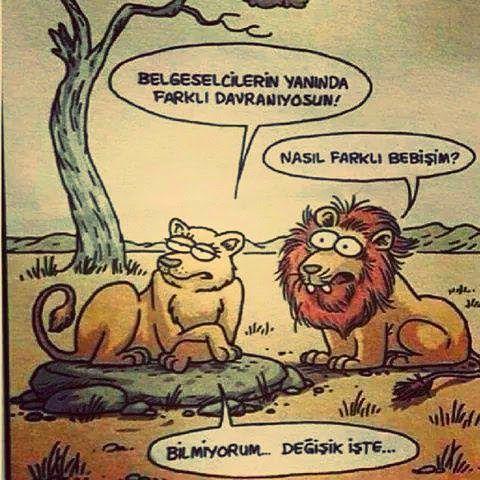 Belgeselcilerin Yanında Farklı Davranan Aslan