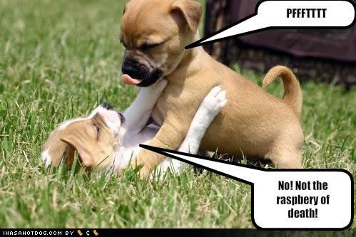 Funny Animals Funny Pictures Cute Puppies Cute Small Dogs