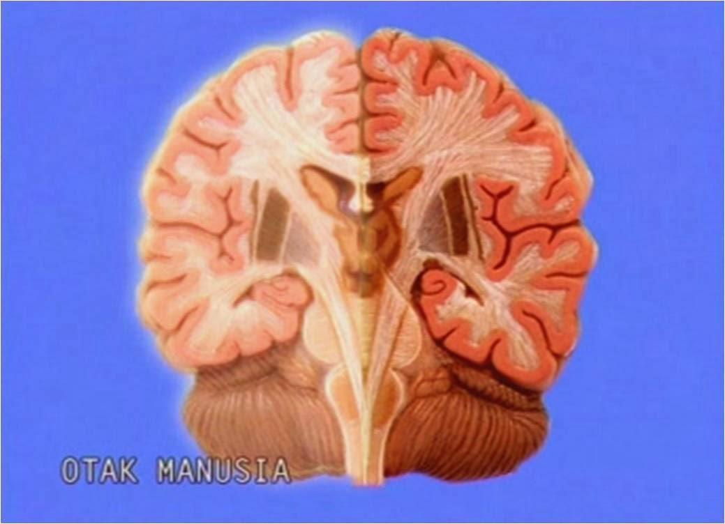 polemik aktivasi Otak tengah