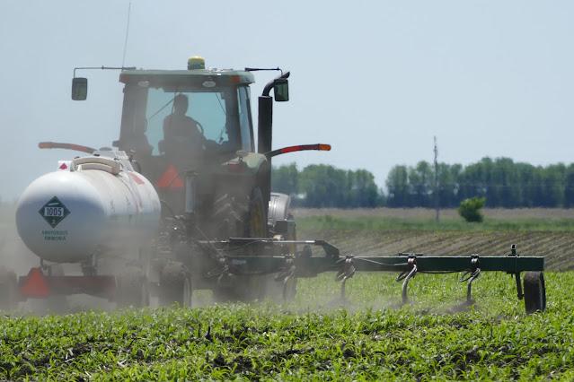 split application nitrogen fertilizer minnesota sidedress