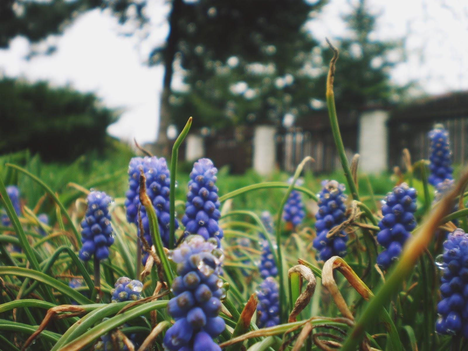 kwiatki makro