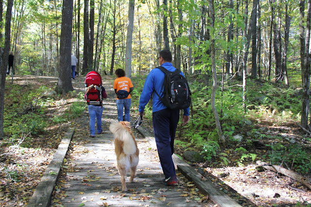 golden retriever hiking Lantern Hill #walktober The Last Green Valley