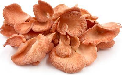 Immune-Boosting Power of Mushrooms