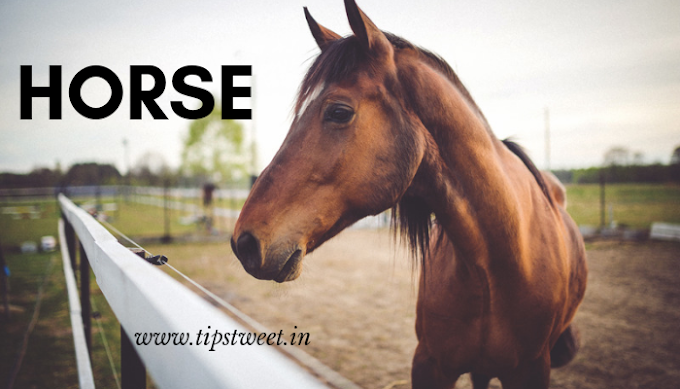 The Horse Essay For KIDS || Essay on Horse within 500 Words