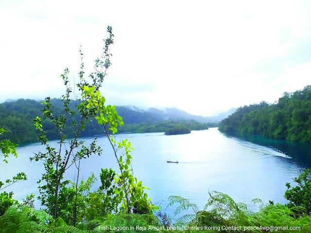 Pemandangan Laguna Ikan di Raja Ampat