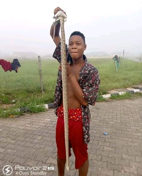 Huge Python Killed In Hostel At The Federal University Otuoke, Bayelsa (Photos)