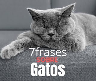 7 Frases sobre Gatos