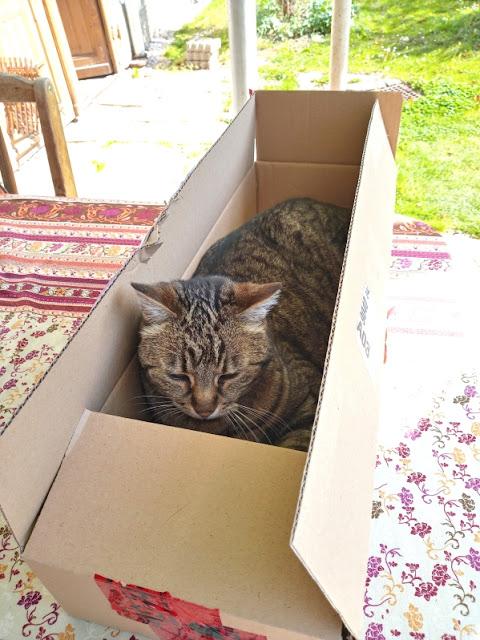 Katze im Karton - Cat in the box