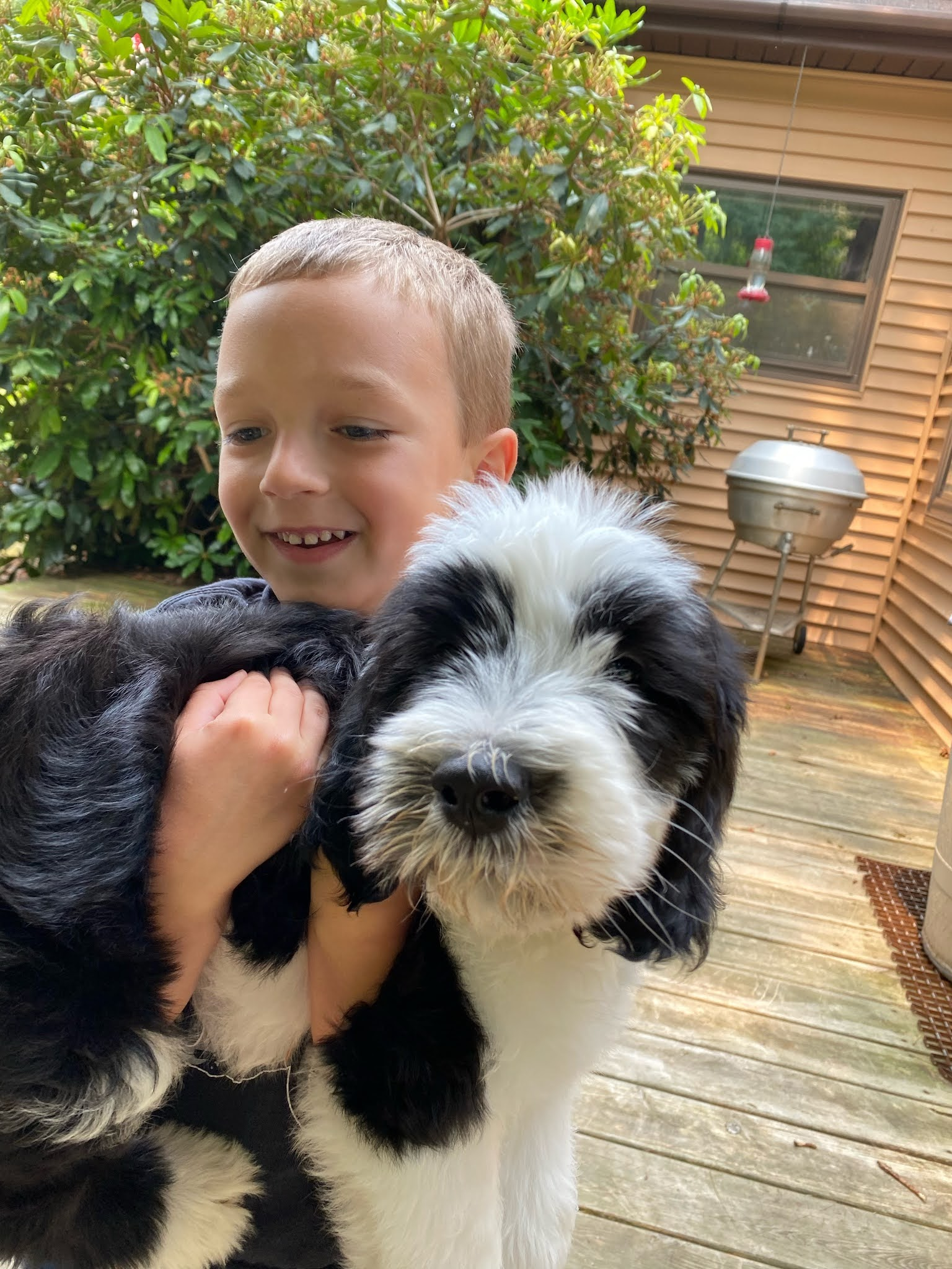 Henry the Puppy | biblio-style.com