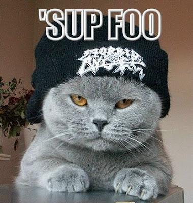 Funny Hip Hop Cat Funny Comedy Pics