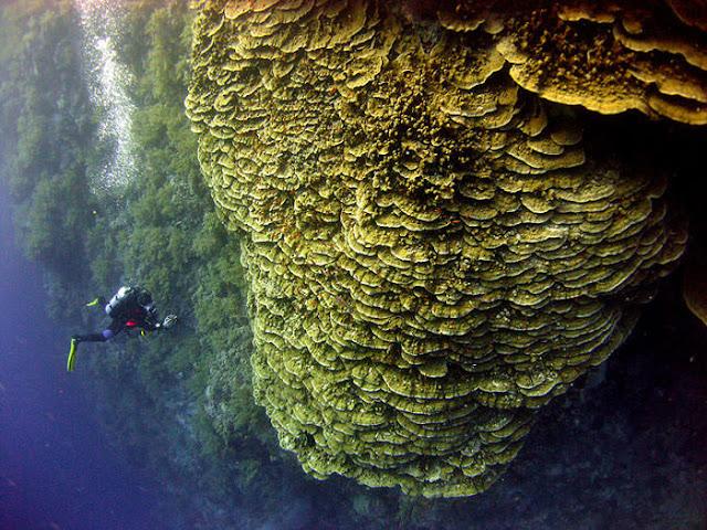 Menyelam di laut merah, Mesir