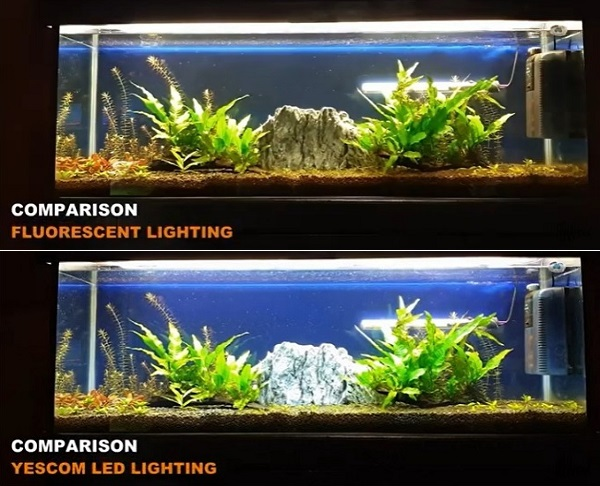 Comparison of Fluorescent vs Yescom Lights