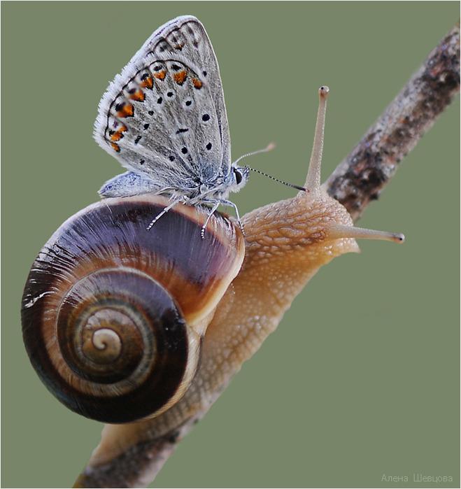 через объектив: Красивые фотографии бабочек   Улитка ...