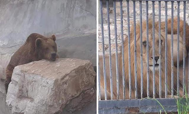 تونس : صور مؤسفة ... وضعية مزرية للحيوانات داخل حديقة البلفيدير !