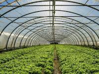 Plastik UV Untuk Pembudidayaan Dalam Green House Ketika Cuaca Tak Menentu