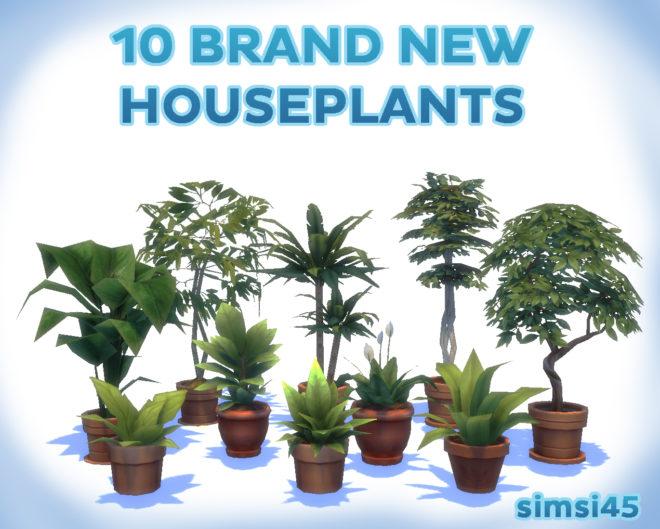 BRAND NEW HOUSEPLANTS