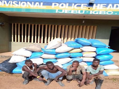 Suspected Indian Hemp Farmers Caught With 42 Bags In Ogun