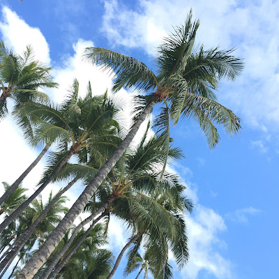 Palm Trees, Oahu, Hawaii