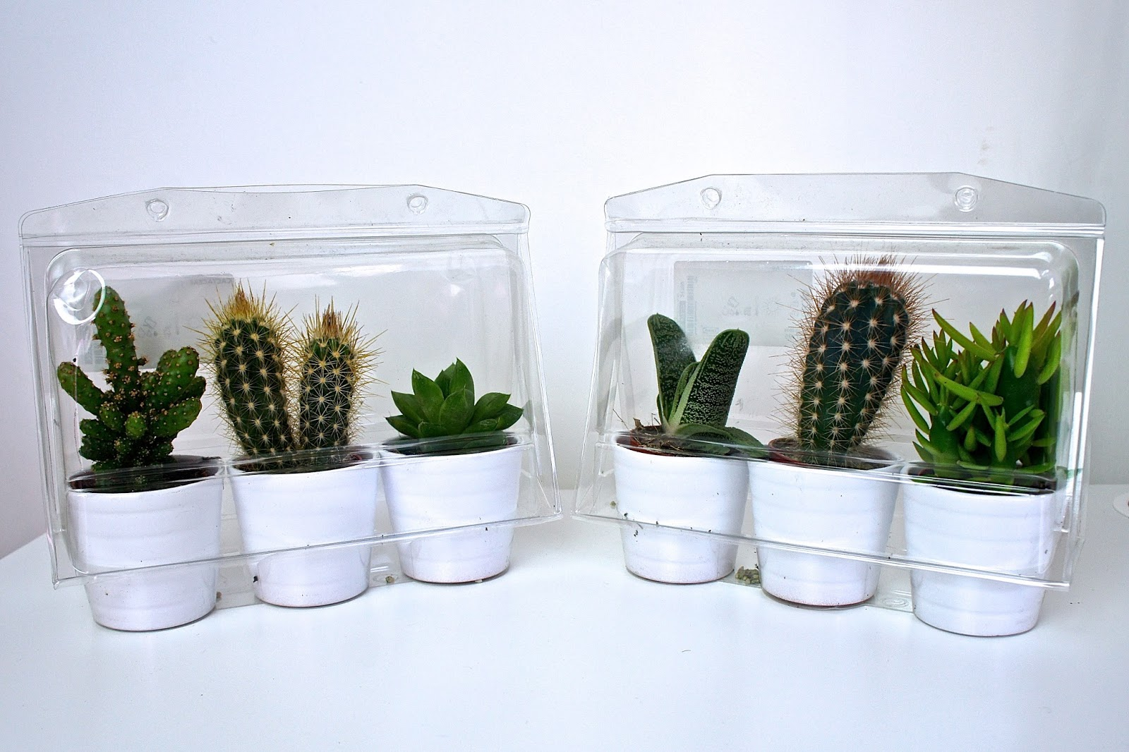 plant, cacti, cactus, lifestyle, homeware, greenery, home