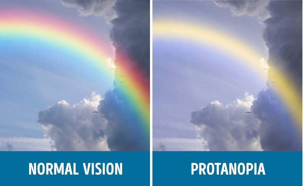 Te sorprenderas de cómo las personas con ceguera de color ven el mundo
