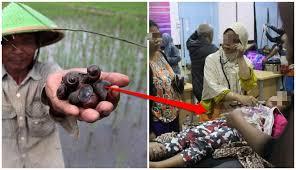 Balada Keong Sawah, Makanan Berprotein Tinggi yang Malah Meracuni Masyarakat Indonesia