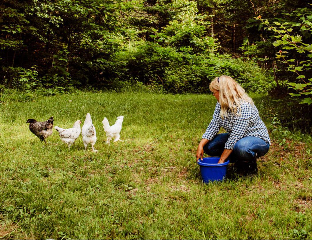 The Beginners Guide To Raising Backyard Chickens Fresh Eggs Daily