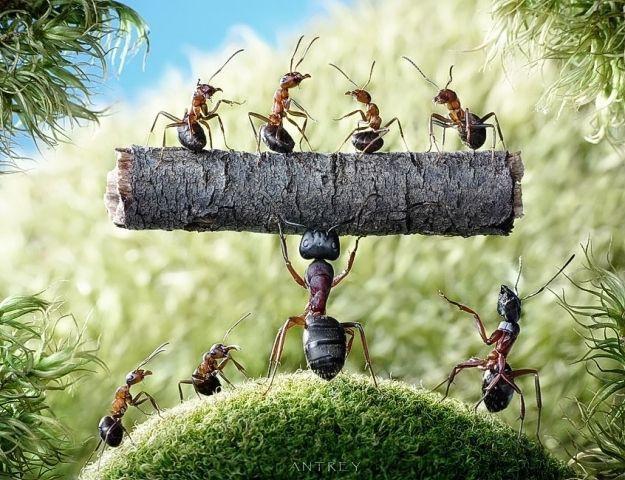 صَرْخة نملة