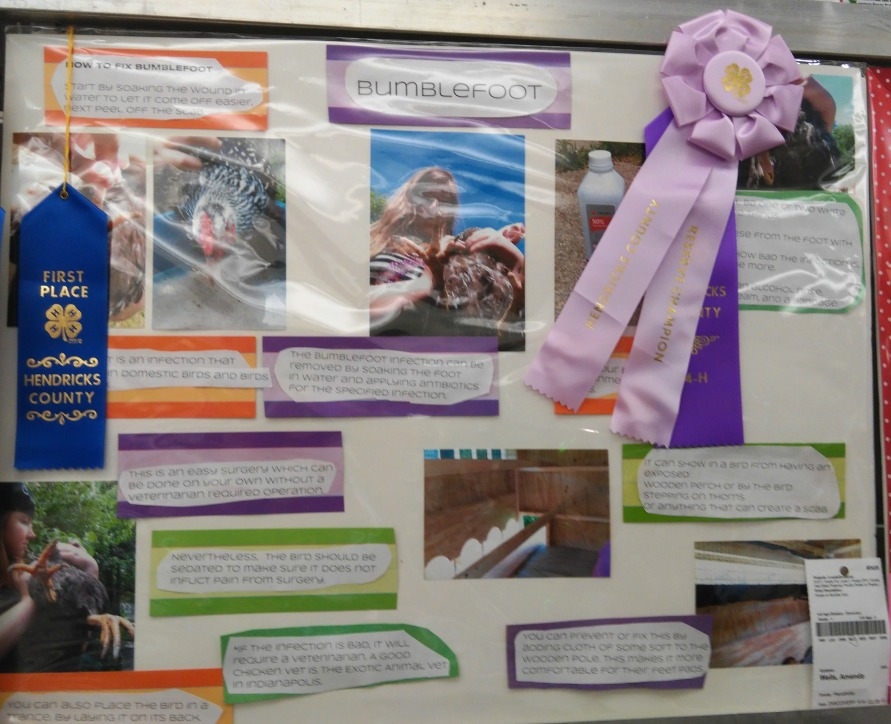 How to Enter Indiana State Fair: County 4 H Fair - Kids Creative Chaos