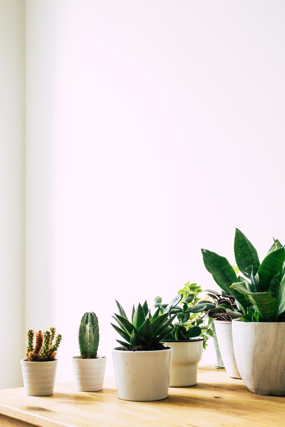 stock photo of a group of Succulent plants
