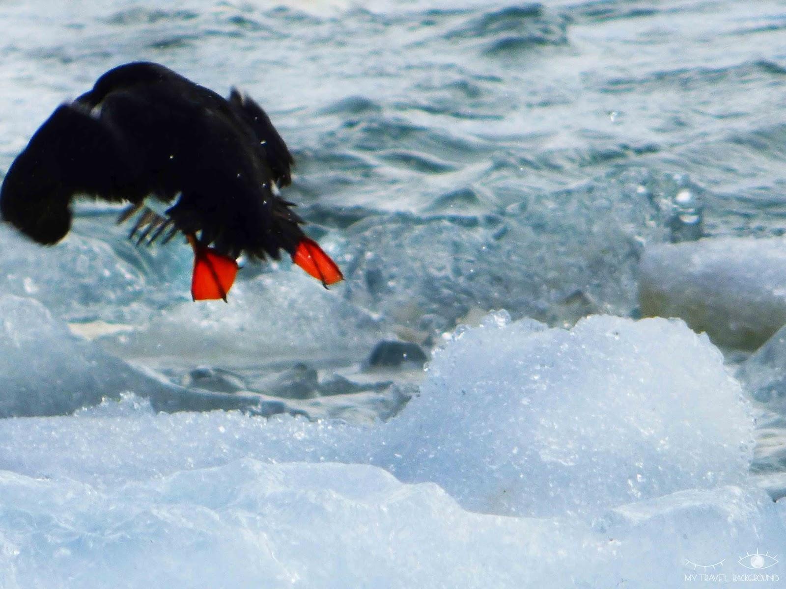 My Travel Background : 15 photos prises au bon moment ! Islande