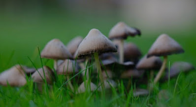 Fungus In Your Summer Garden