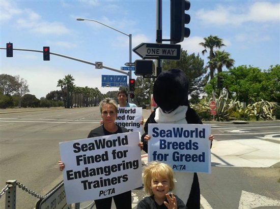 Incidents At Seaworld Parks: SeaWorld Slammed With Federal Fine Over Unsafe Conditions