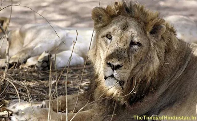 Rhino Poacher Killed By An Elephant And Then Swallowed By Lions