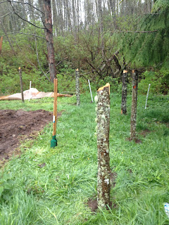 Pacific northwest paleo home made fence building decisions - Skagit craigslist farm and garden ...