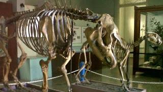 Kebun Raya Bogor Serta Museum Zoologi Bogor