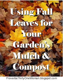 https://proverbsthirtyonewoman.blogspot.com/2018/09/using-fall-leaves-for-garden-mulch.html