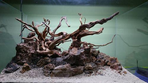 lũa và đá kết hợp trong hồ thủy sinh