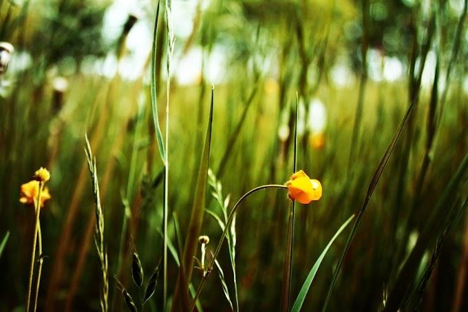 Cây cỏ không vô tình