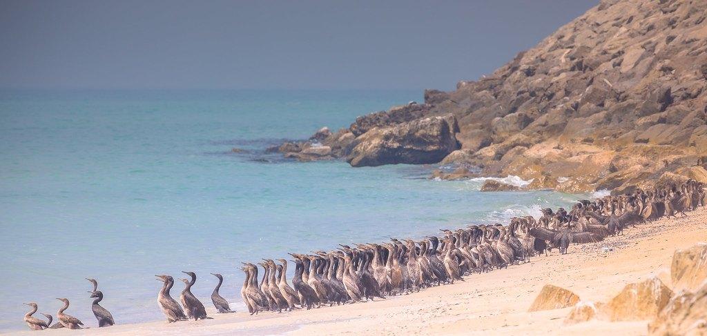 Pristine Khasab Beach, Oman