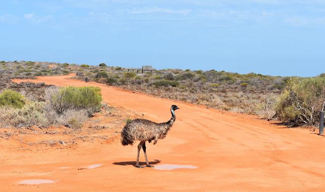 emu en Australia